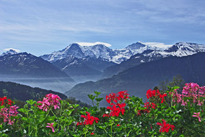 Das gefällt den Schweizern: Alperose